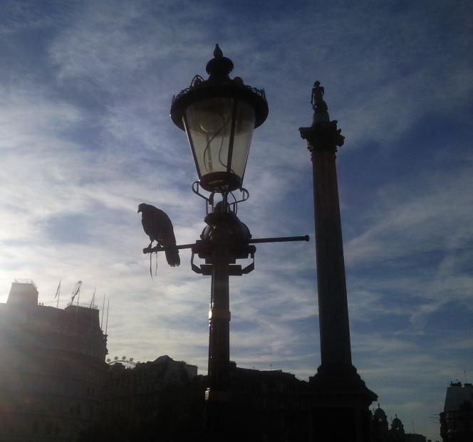 Leicester Square Falcon